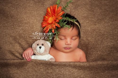 DSC02721 1 500x99999 - گالری تصاویر نوزاد